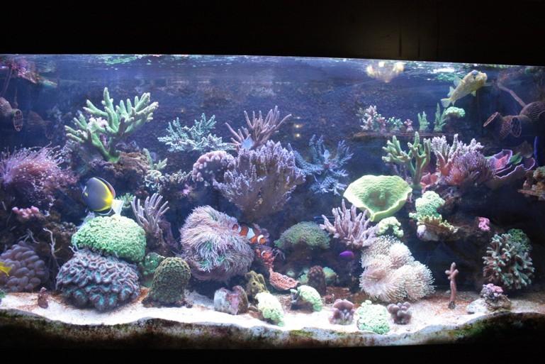 dimitrig Reef