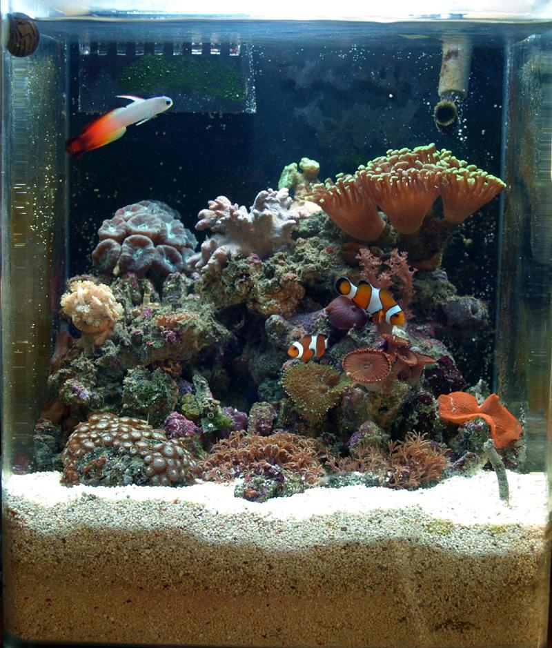 FotisGt pico reef