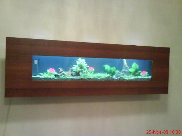 bluefish aquariums