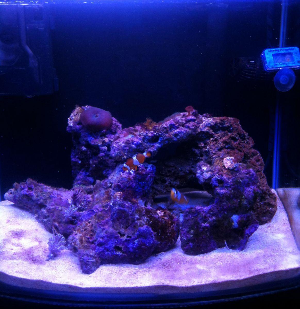 My nano reef (50lit)