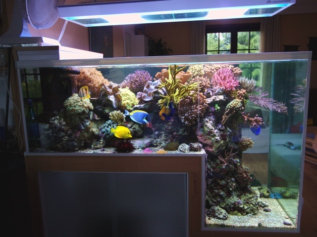 Philippe Grosjeans Reef Aquarium