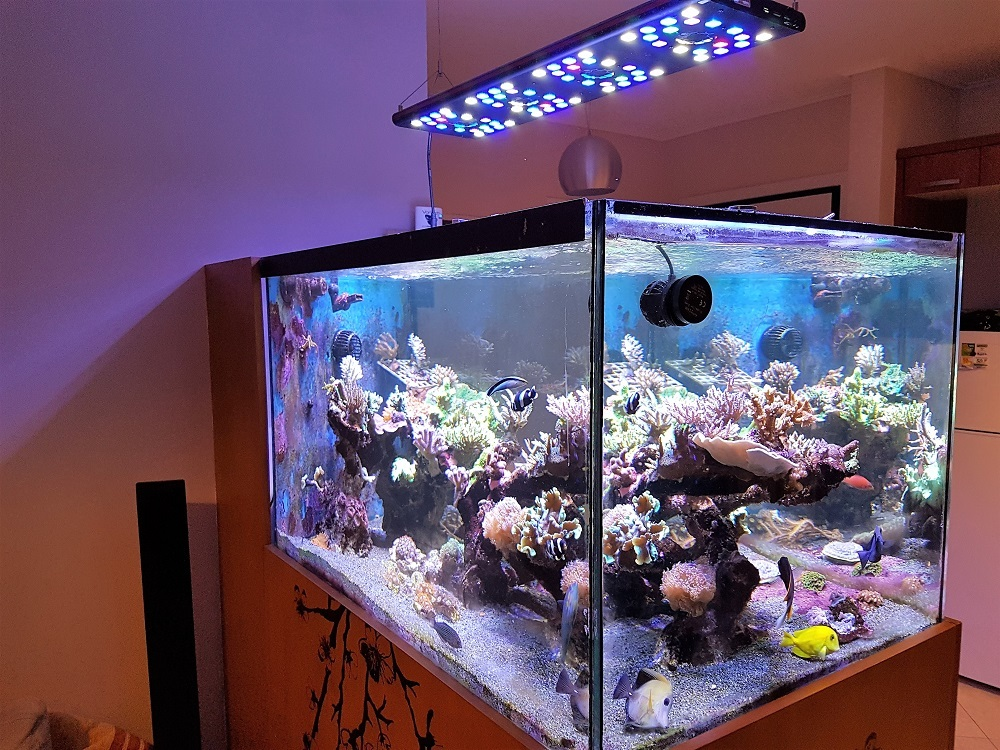 Gante Reef
