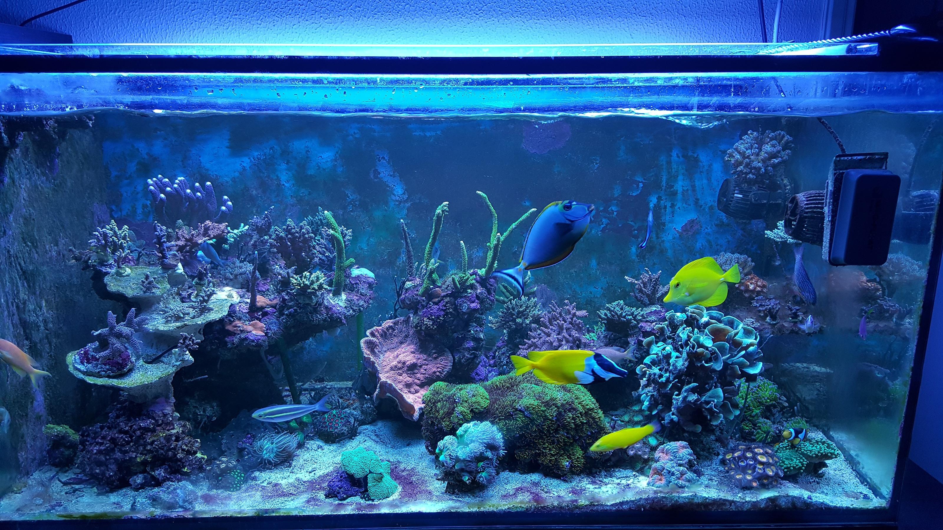 Niknik Reef