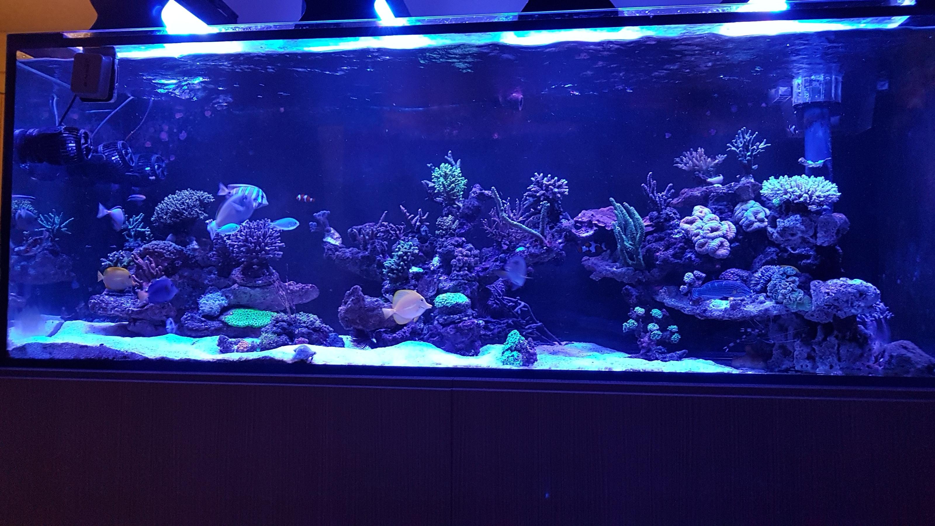 Spy74 reef