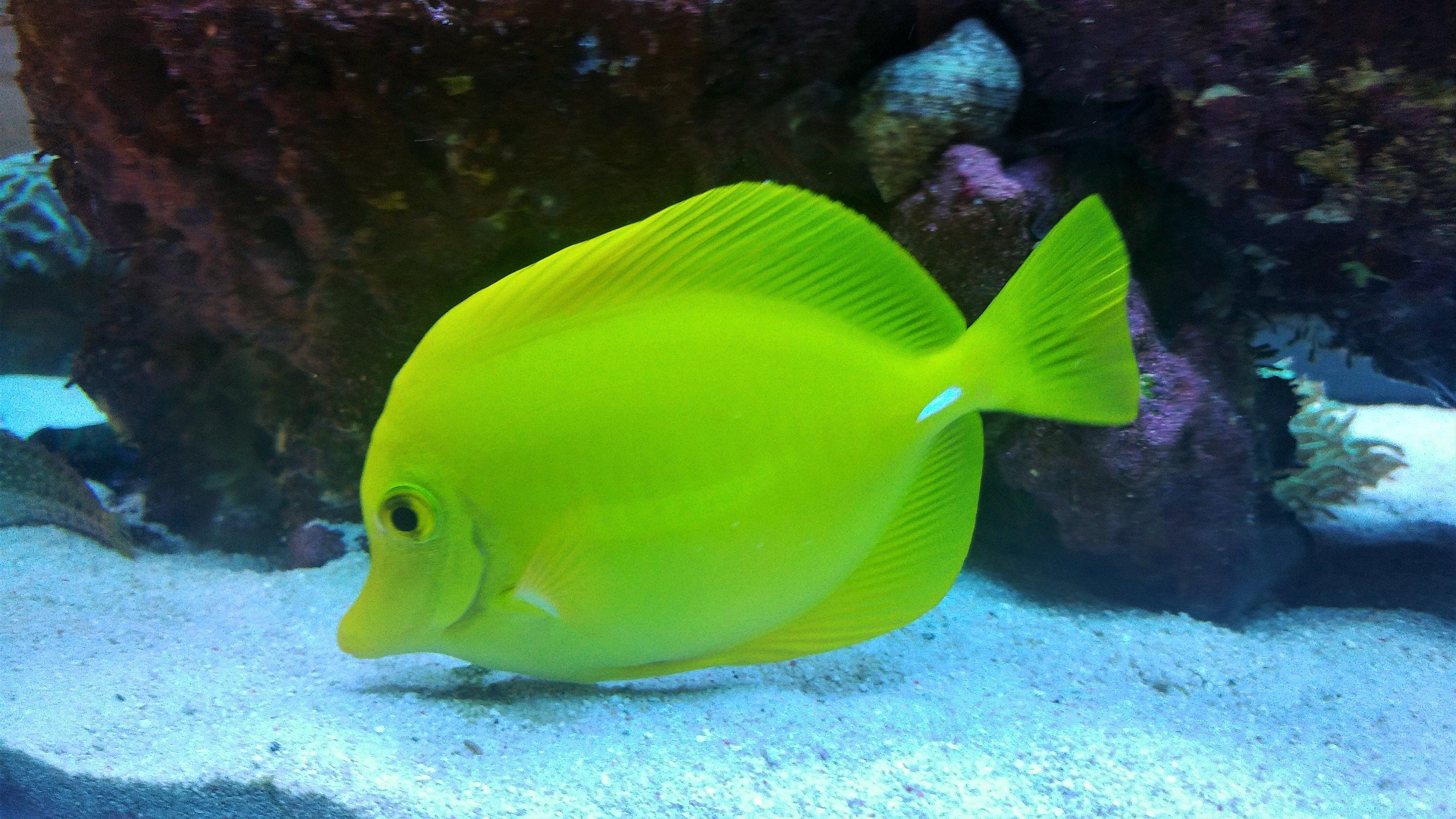 agapi reef