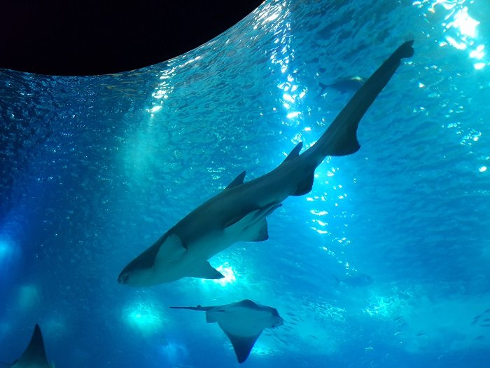 Lisboa aquarium