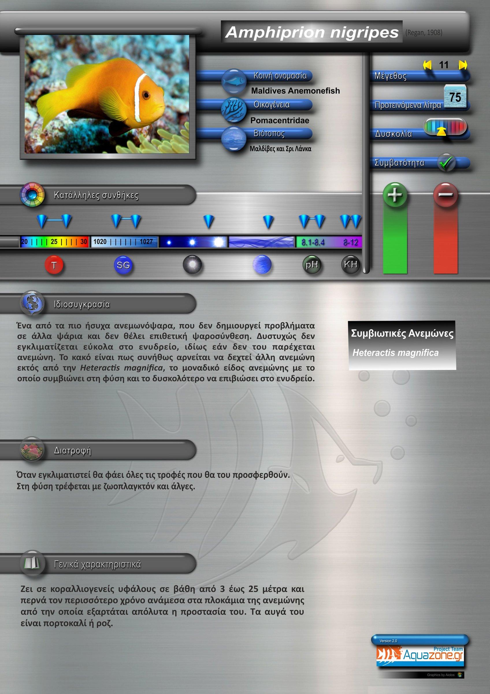 Amphiprion nigripes.jpg