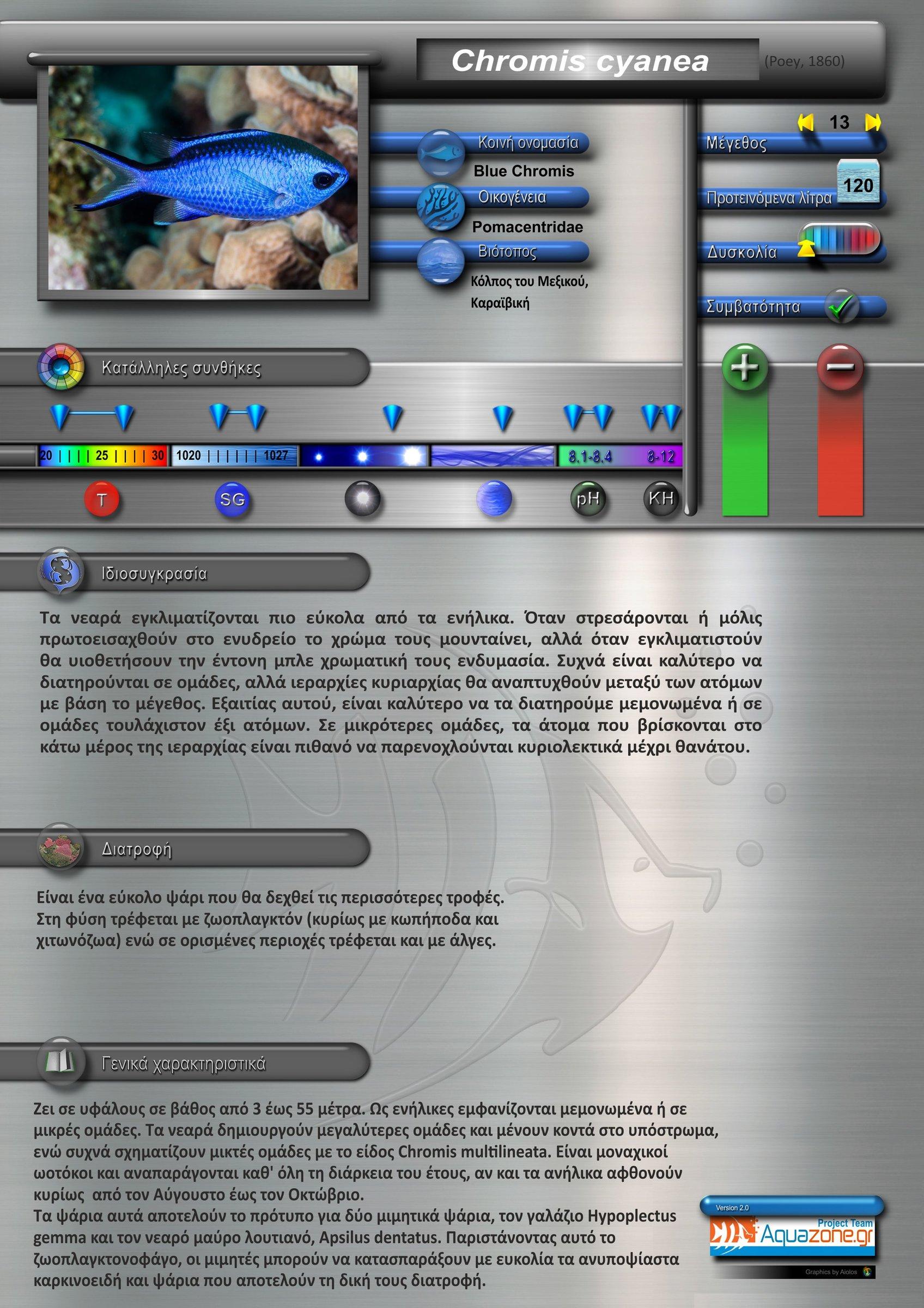 Chromis cyanea.jpg