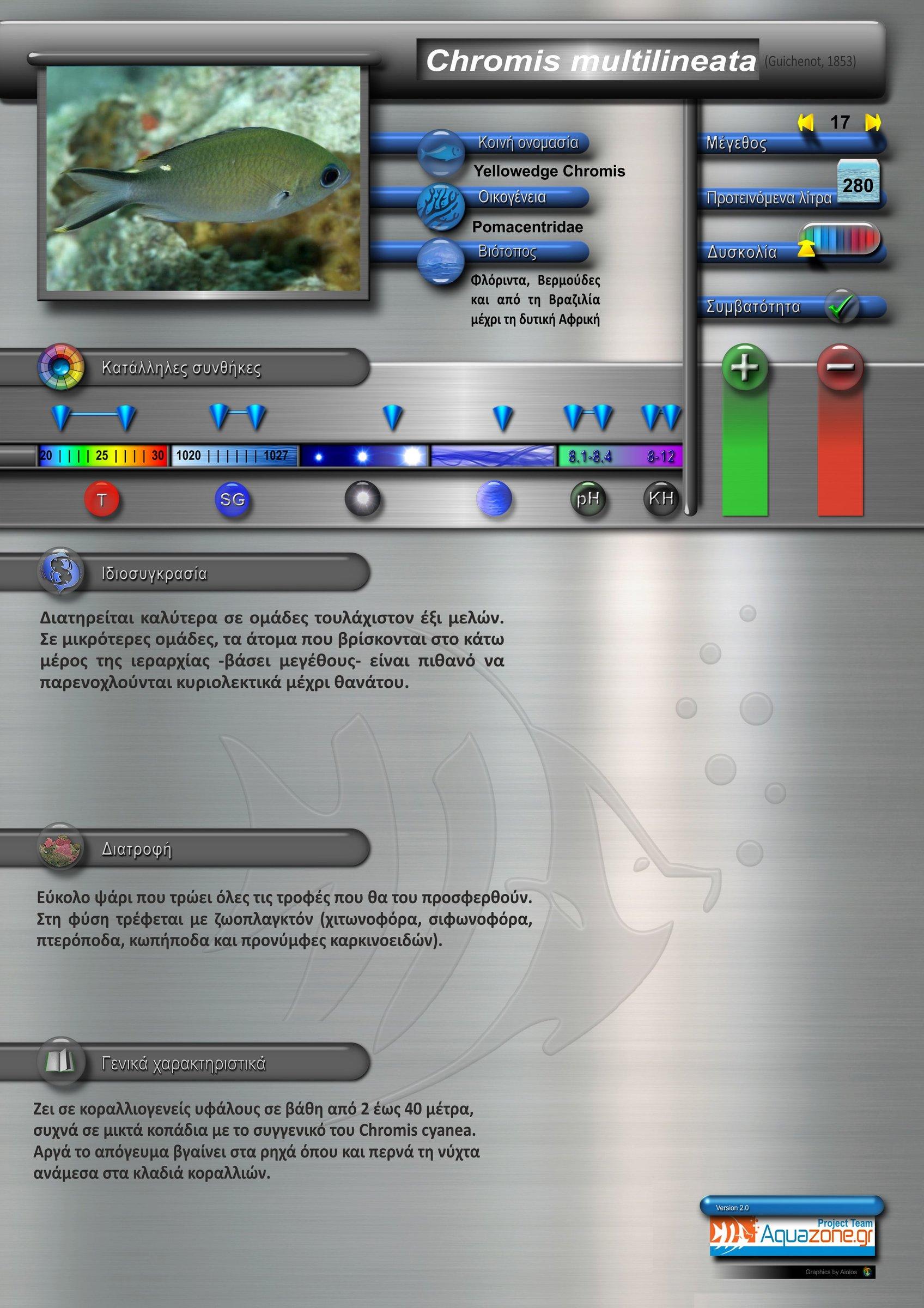 Chromis multilineata.jpg