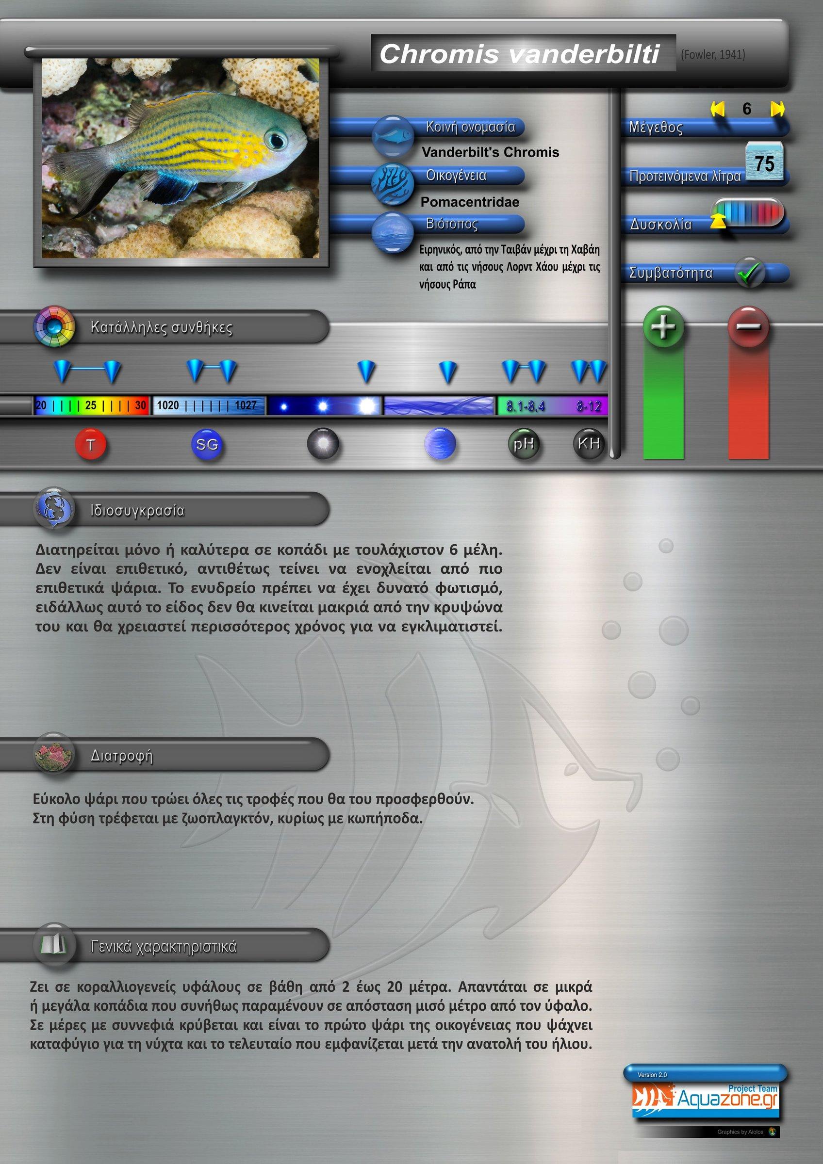 Chromis vanderbilti.jpg