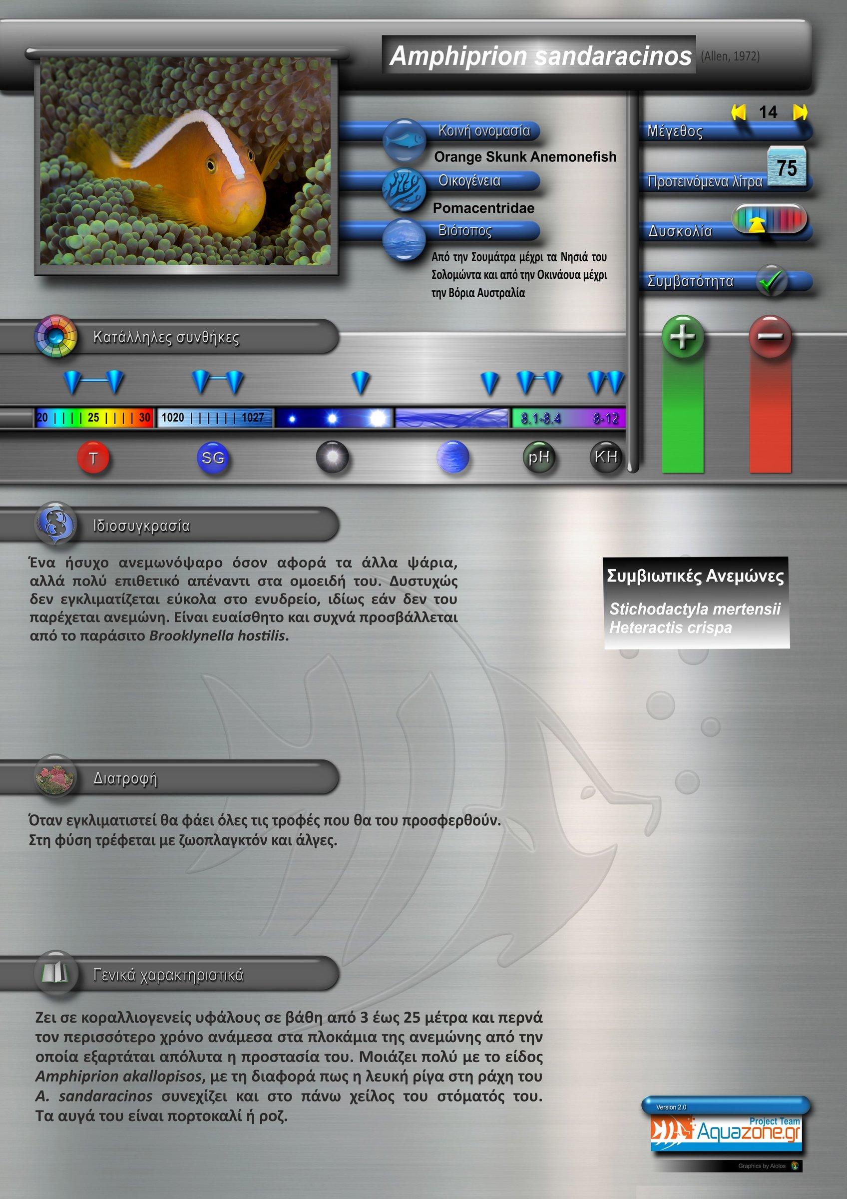 Amphiprion sandaracinos.jpg