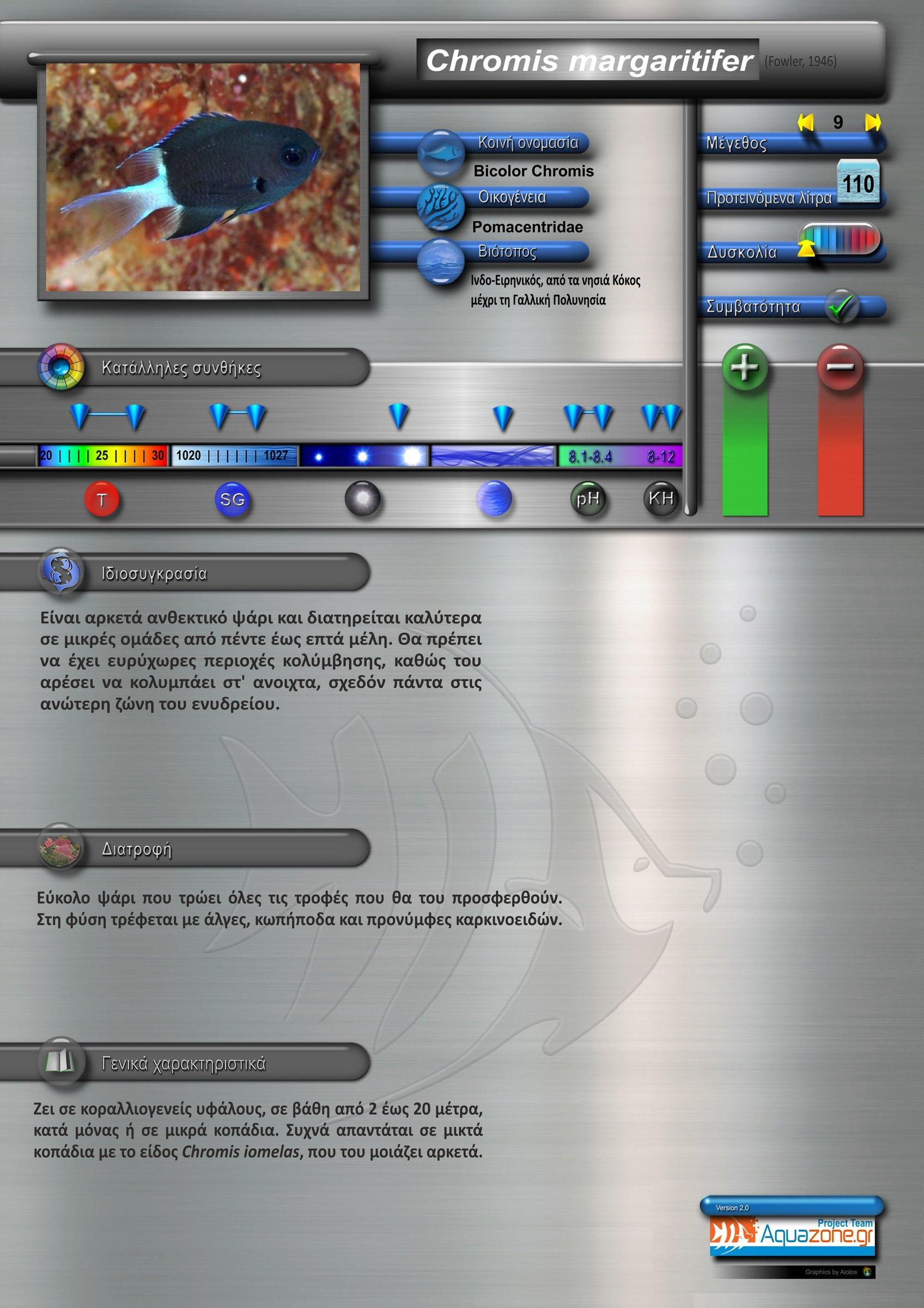 Chromis margaritifer.jpg