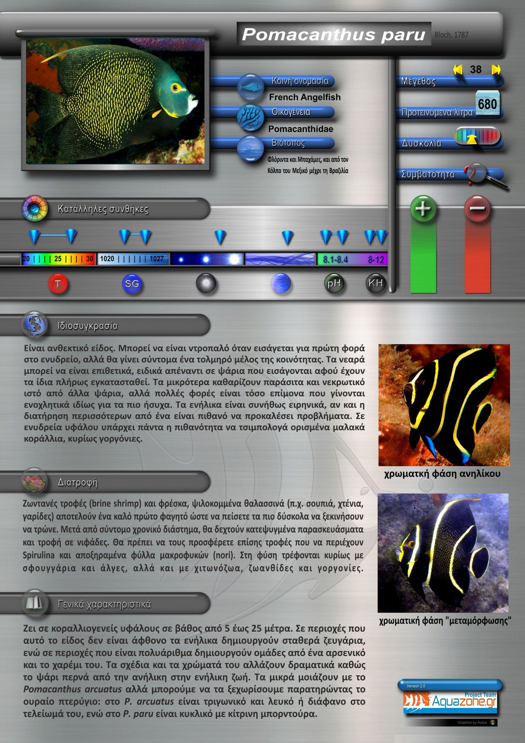 Pomacanthus paru.jpg