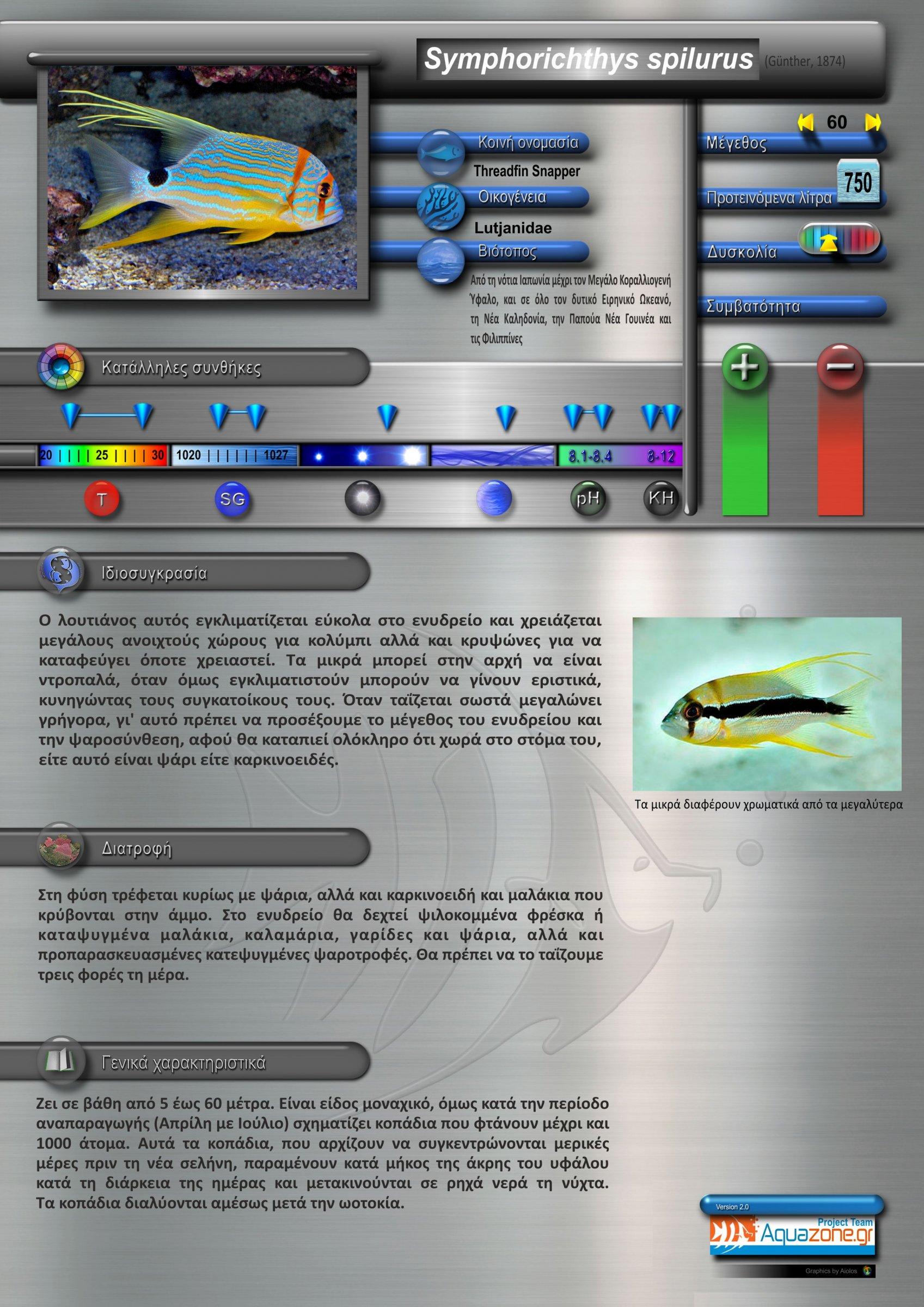 Symphorichthys spilurus.jpg