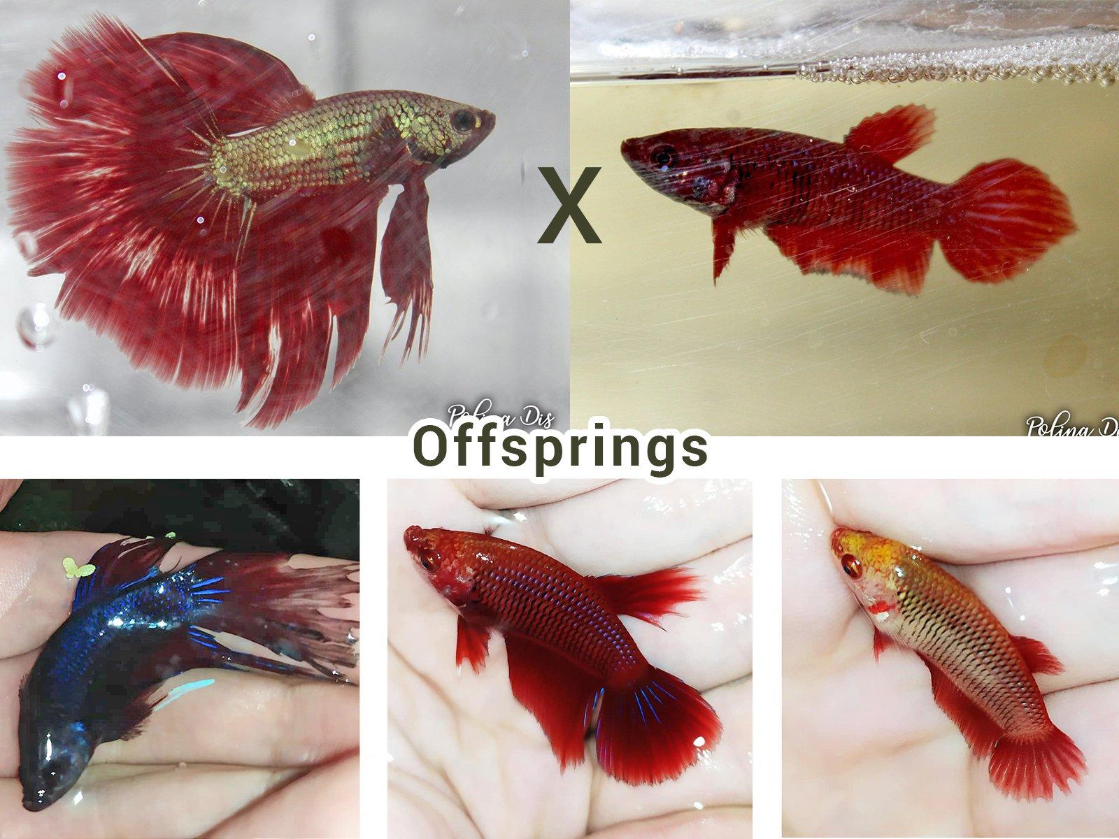 Breeding 3.jpg