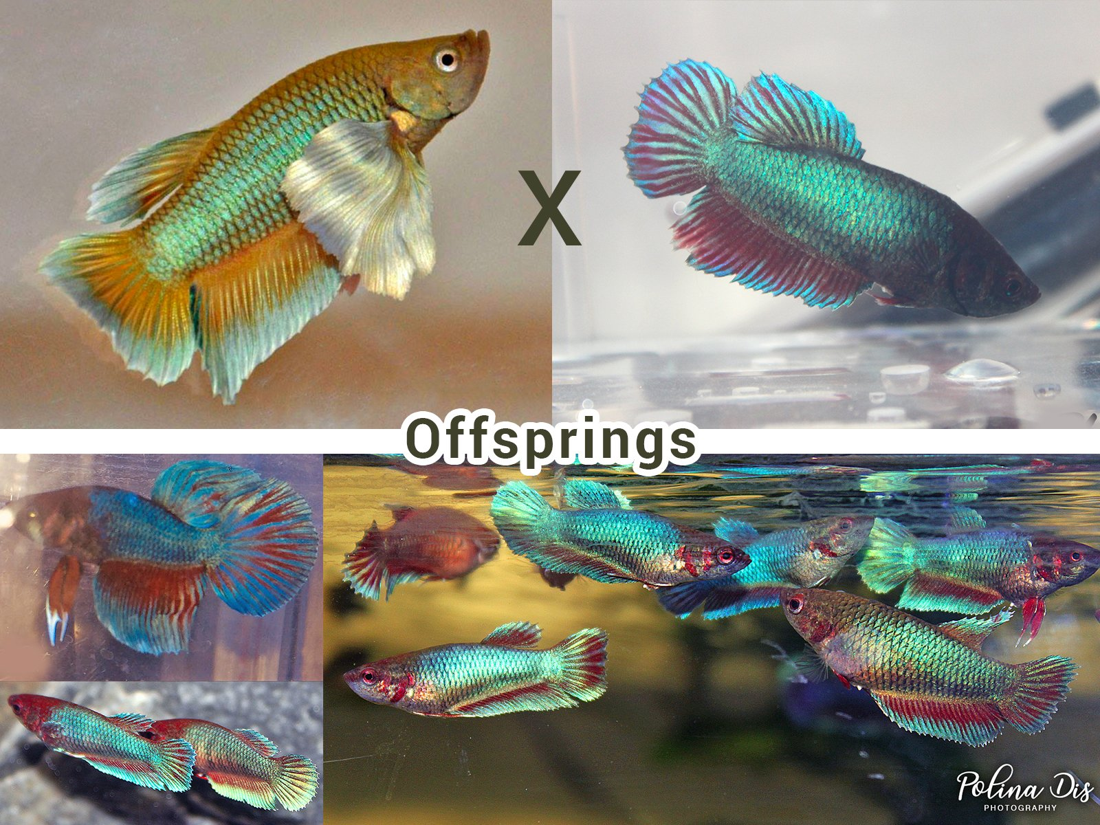 Breeding 2.jpg