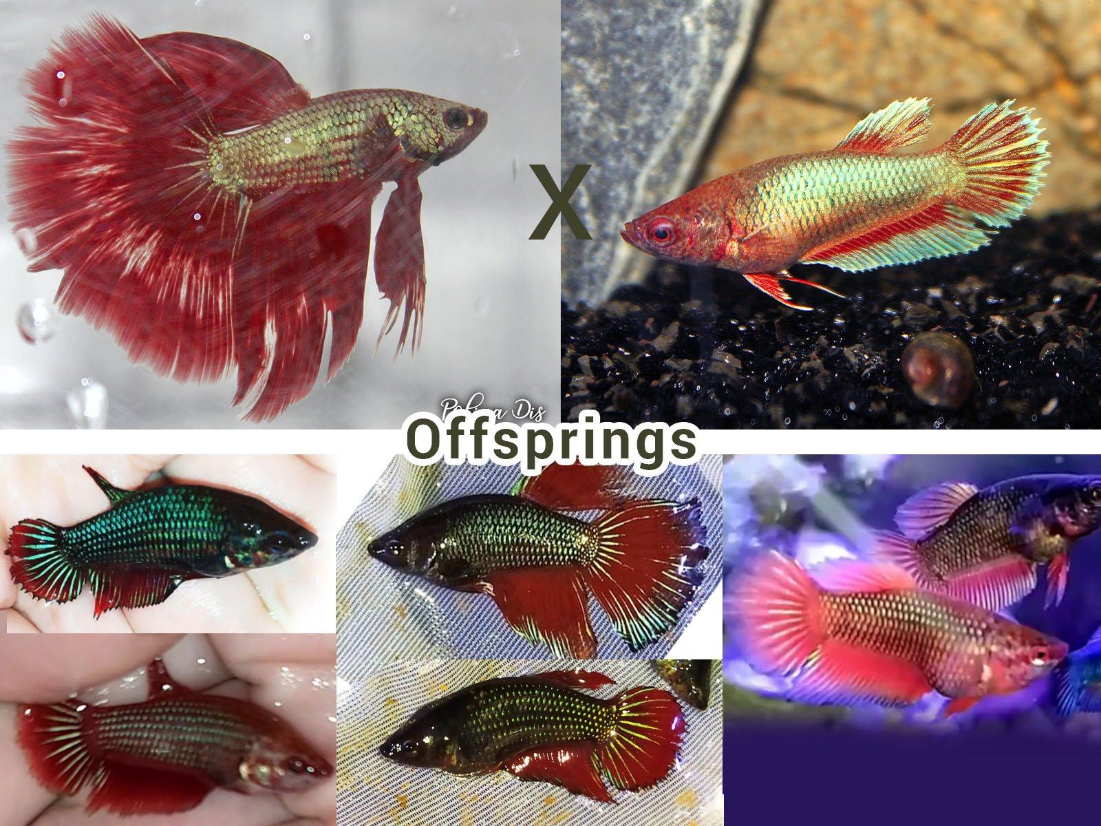 Breeding 5.jpg