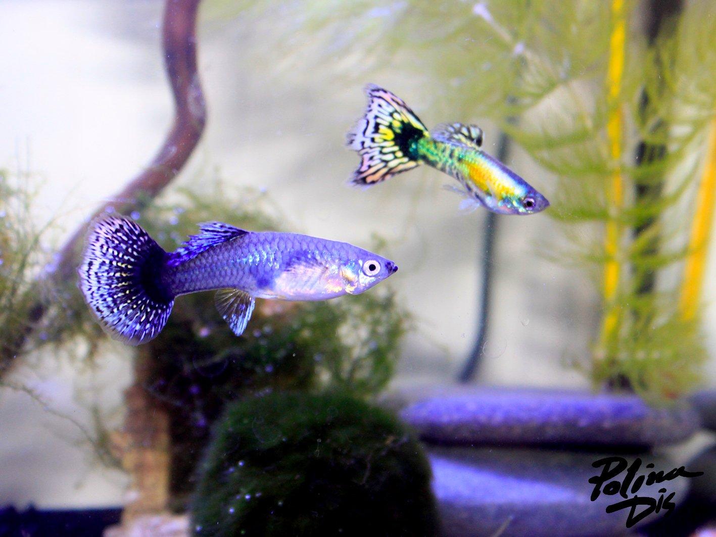 Fish-0042.jpg