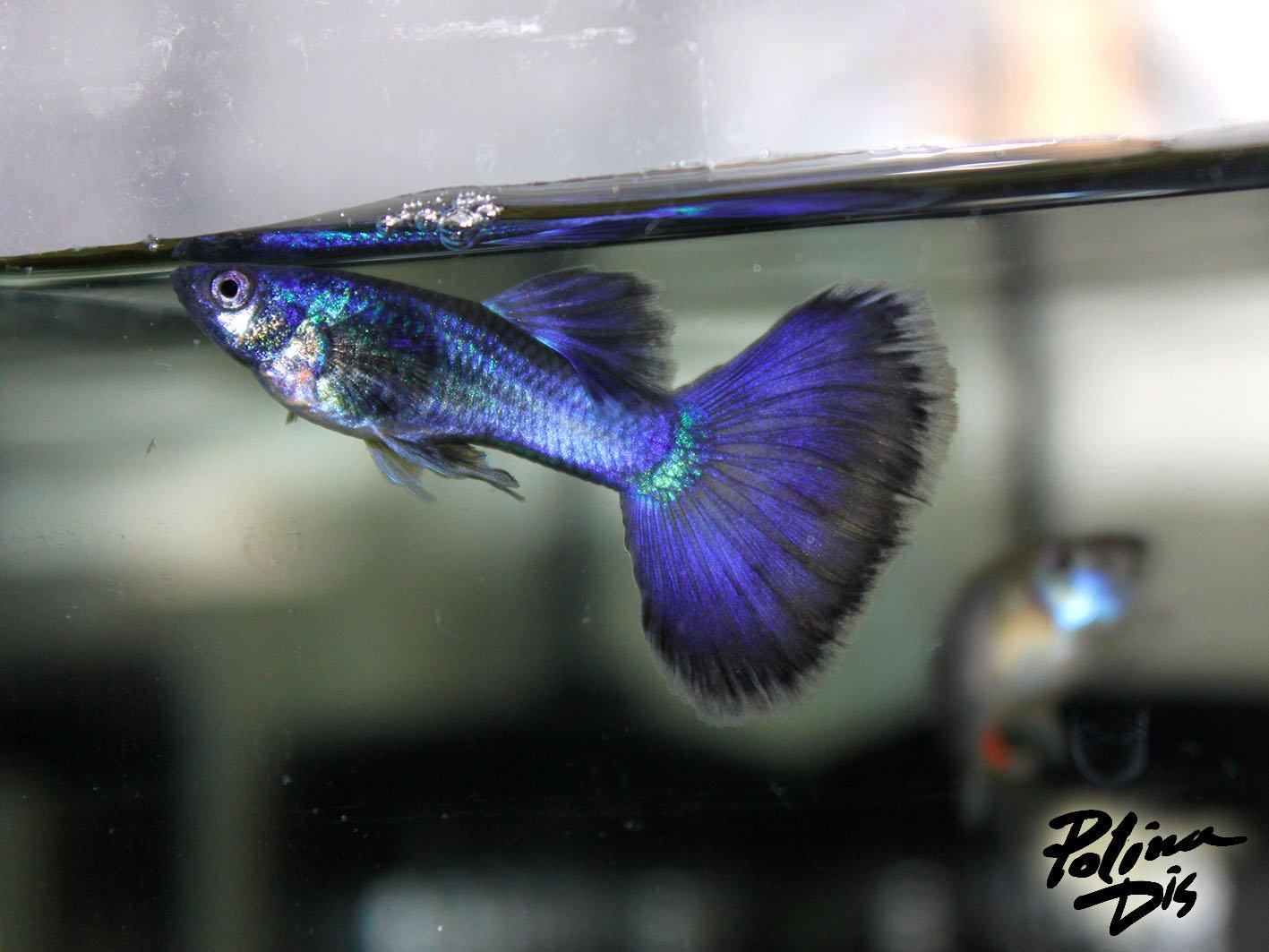 Fish-0160.jpg