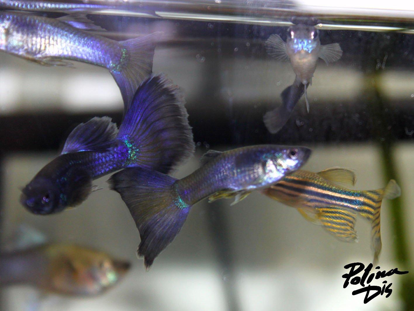 Fish-0176.jpg