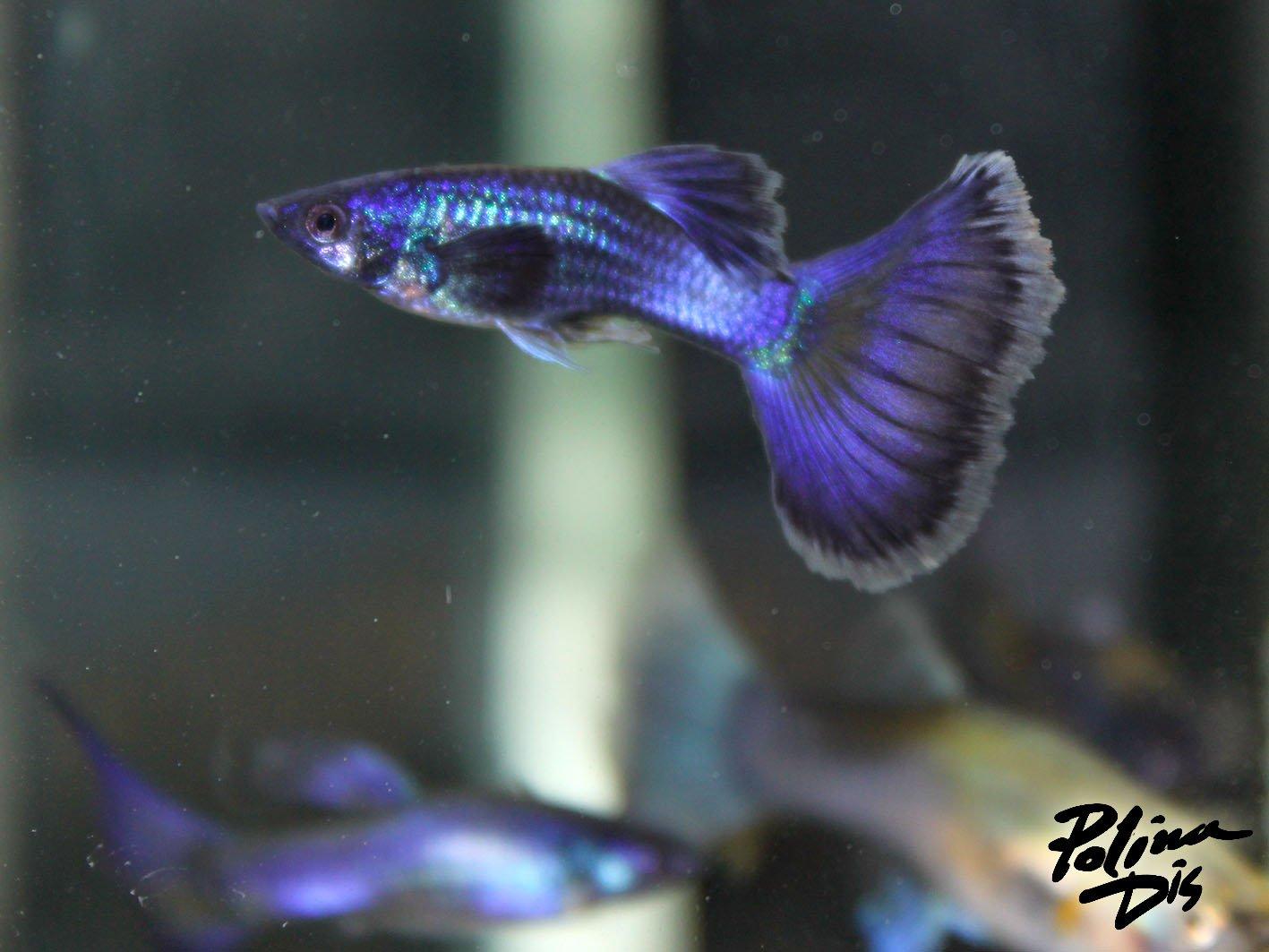 Fish-0188.jpg