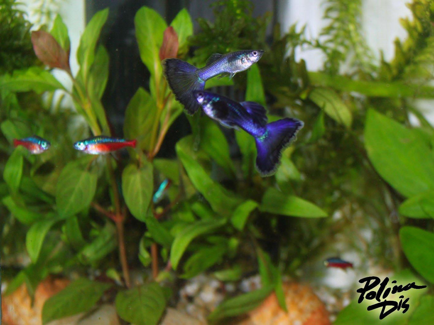 Fish-0194.jpg