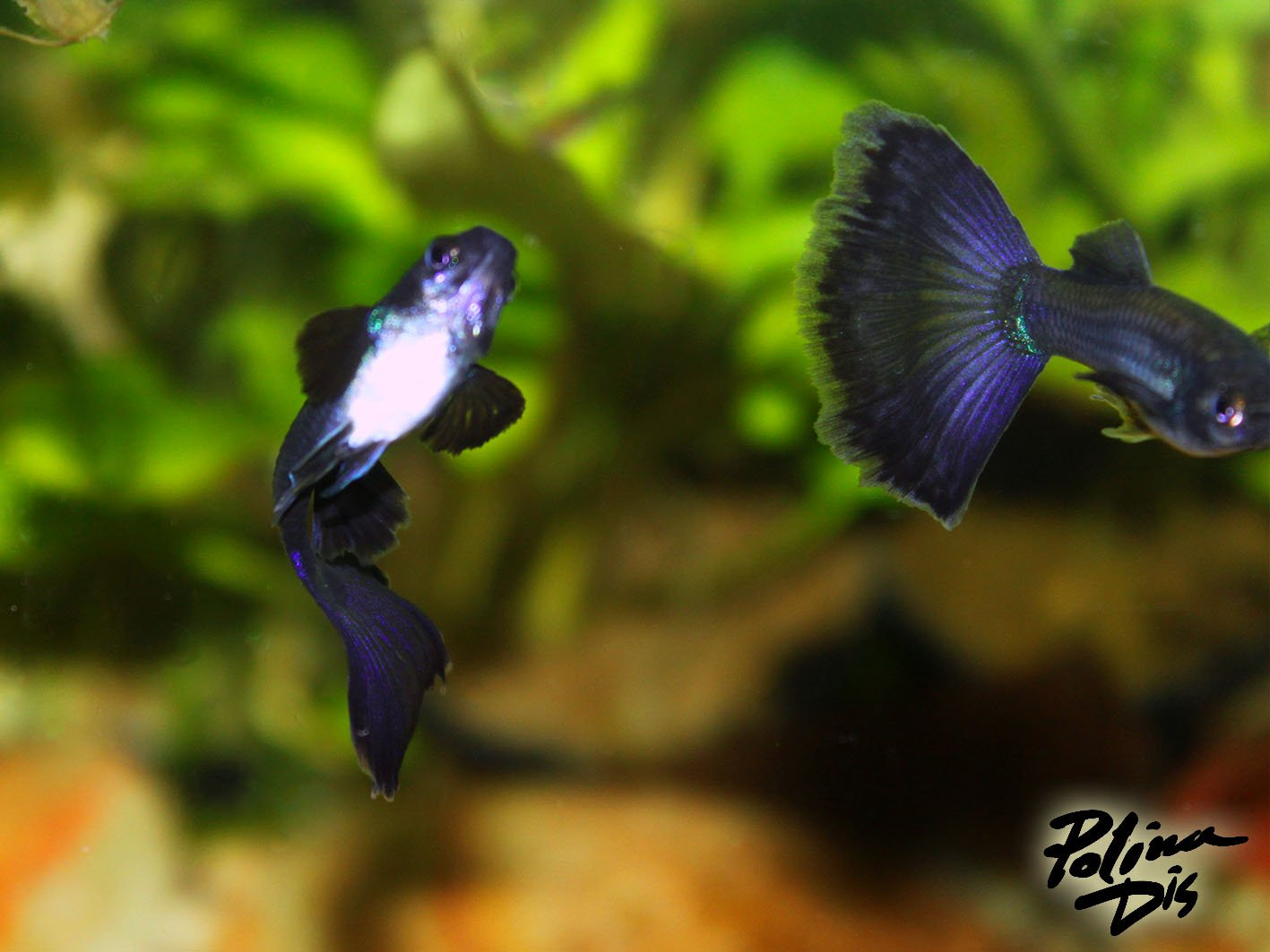 Fish-0229.jpg