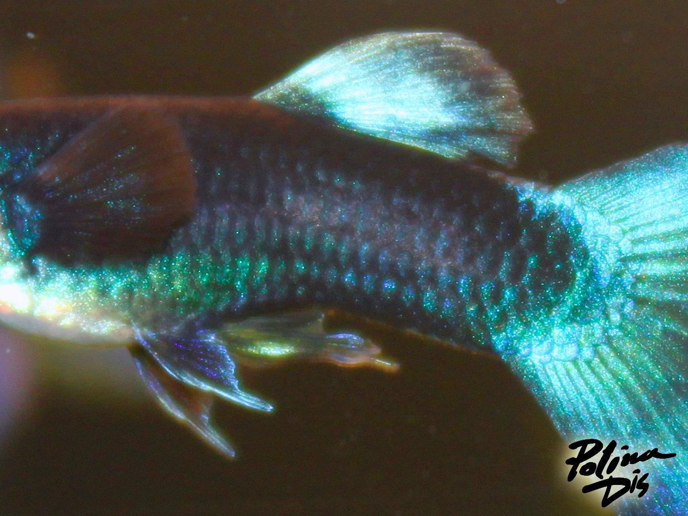 Fish-0244.jpg