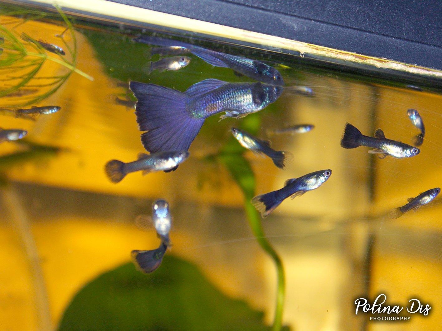 Fish-0290.jpg