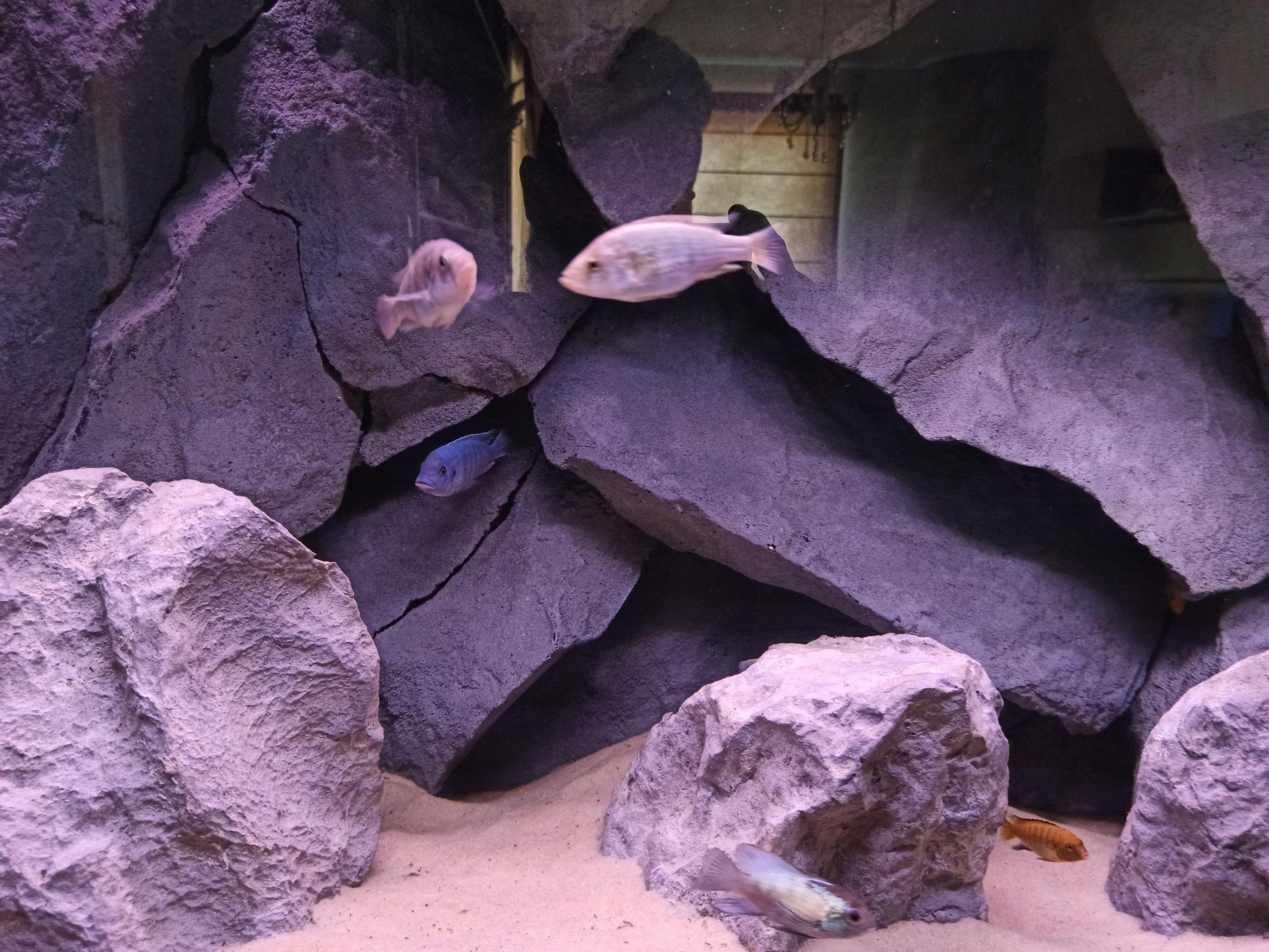 dimitris aquarium-1.jpg