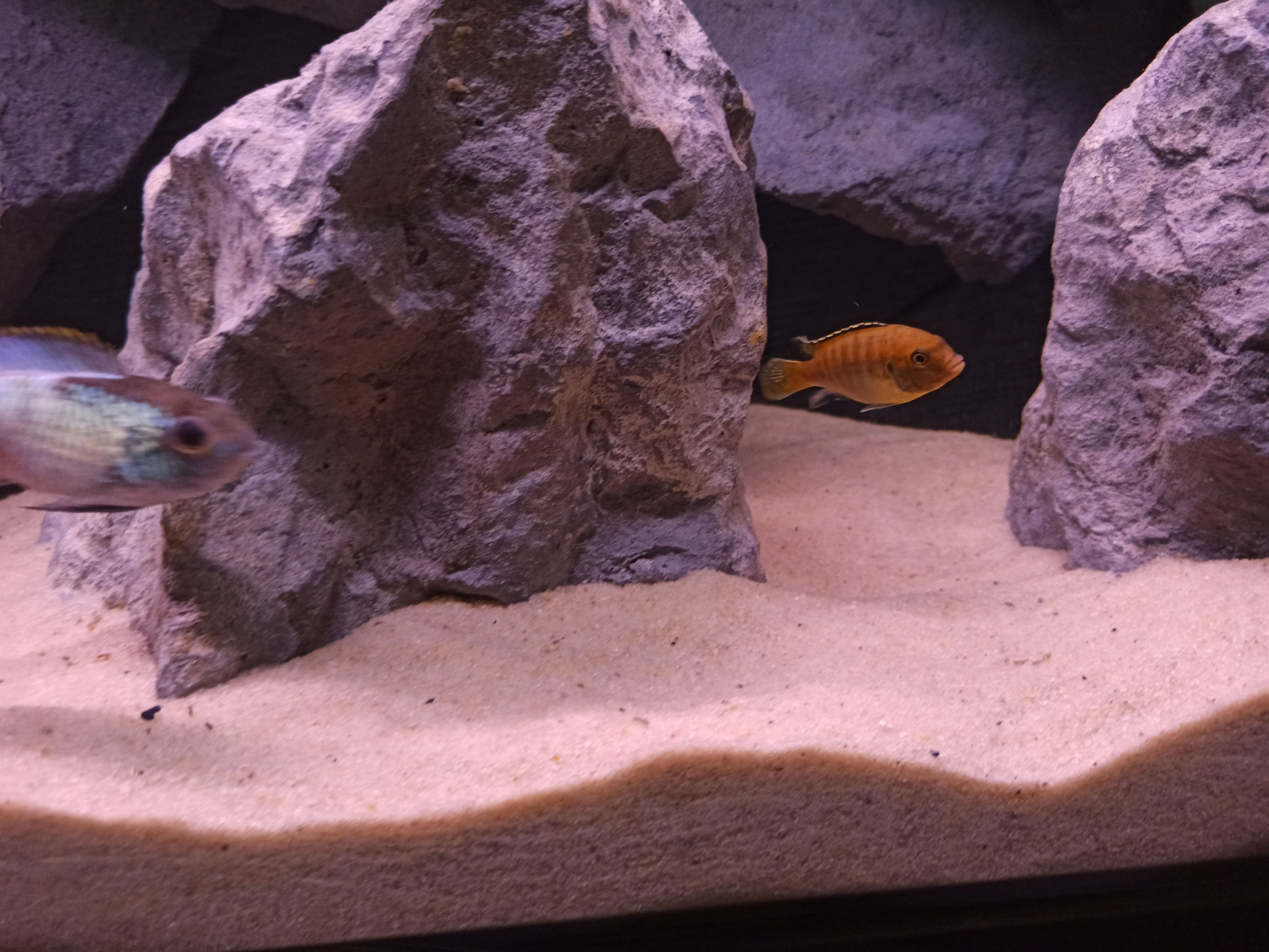 dimitris aquarium-2.jpg