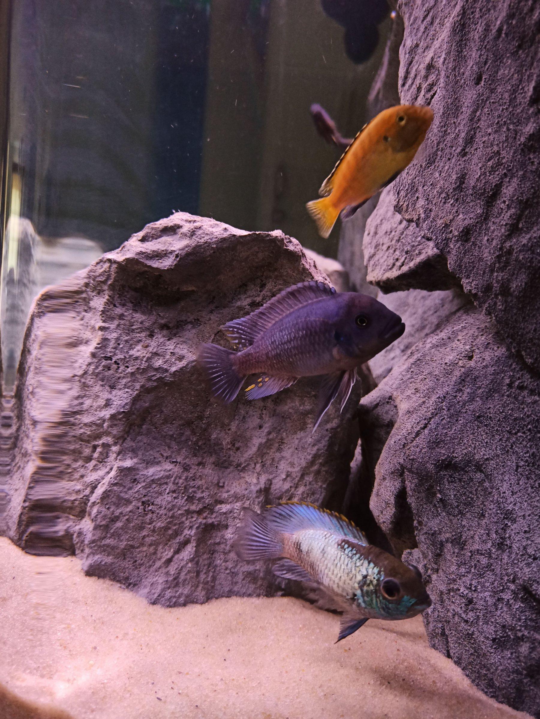 dimitris aquarium-3.jpg