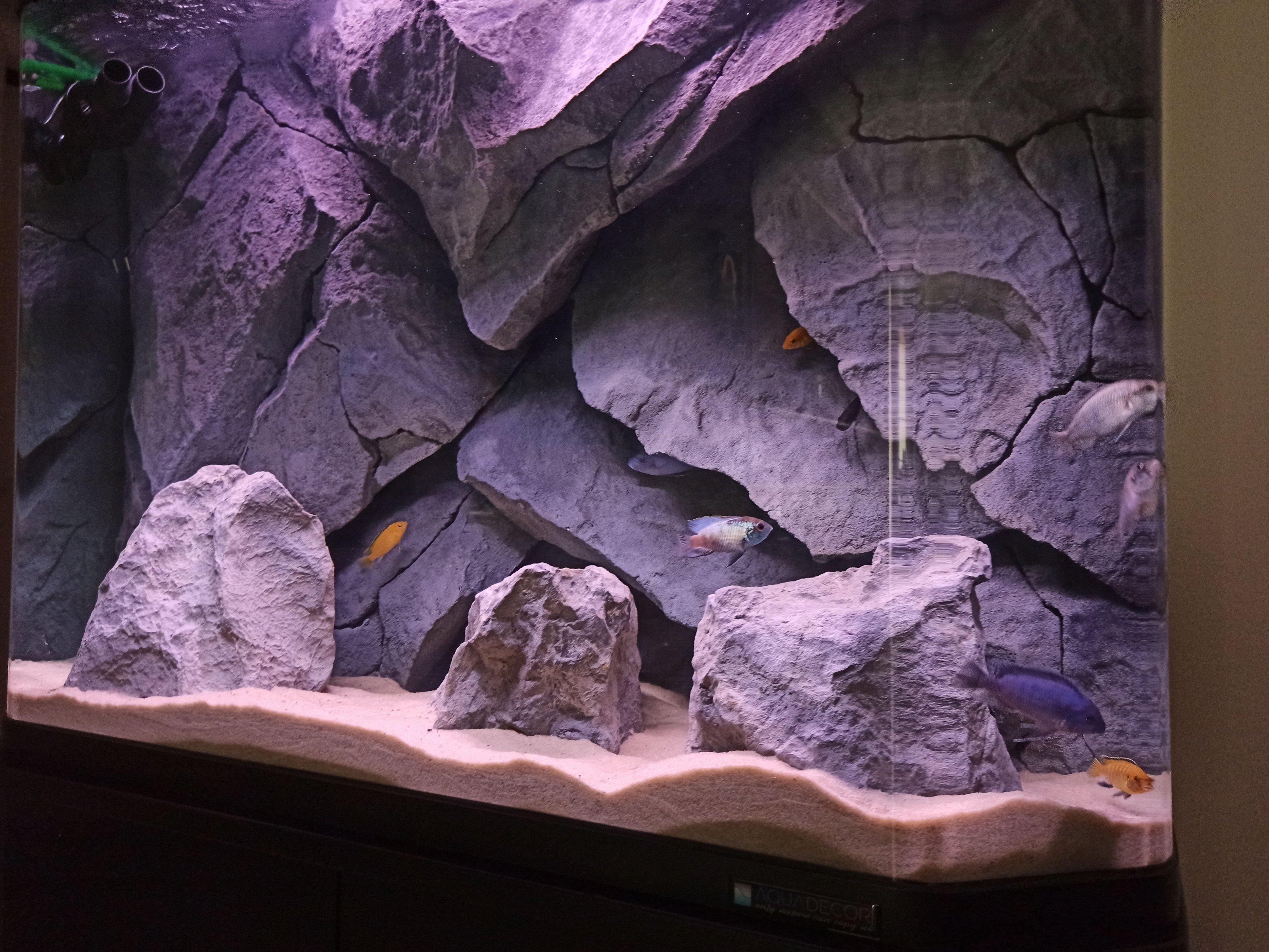 dimitris aquarium-4.jpg