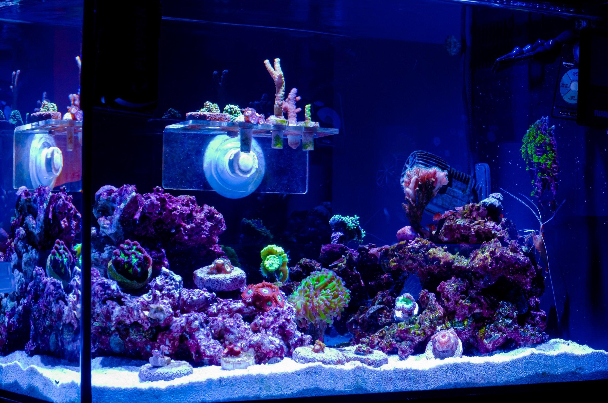 Aquarium-02.jpg