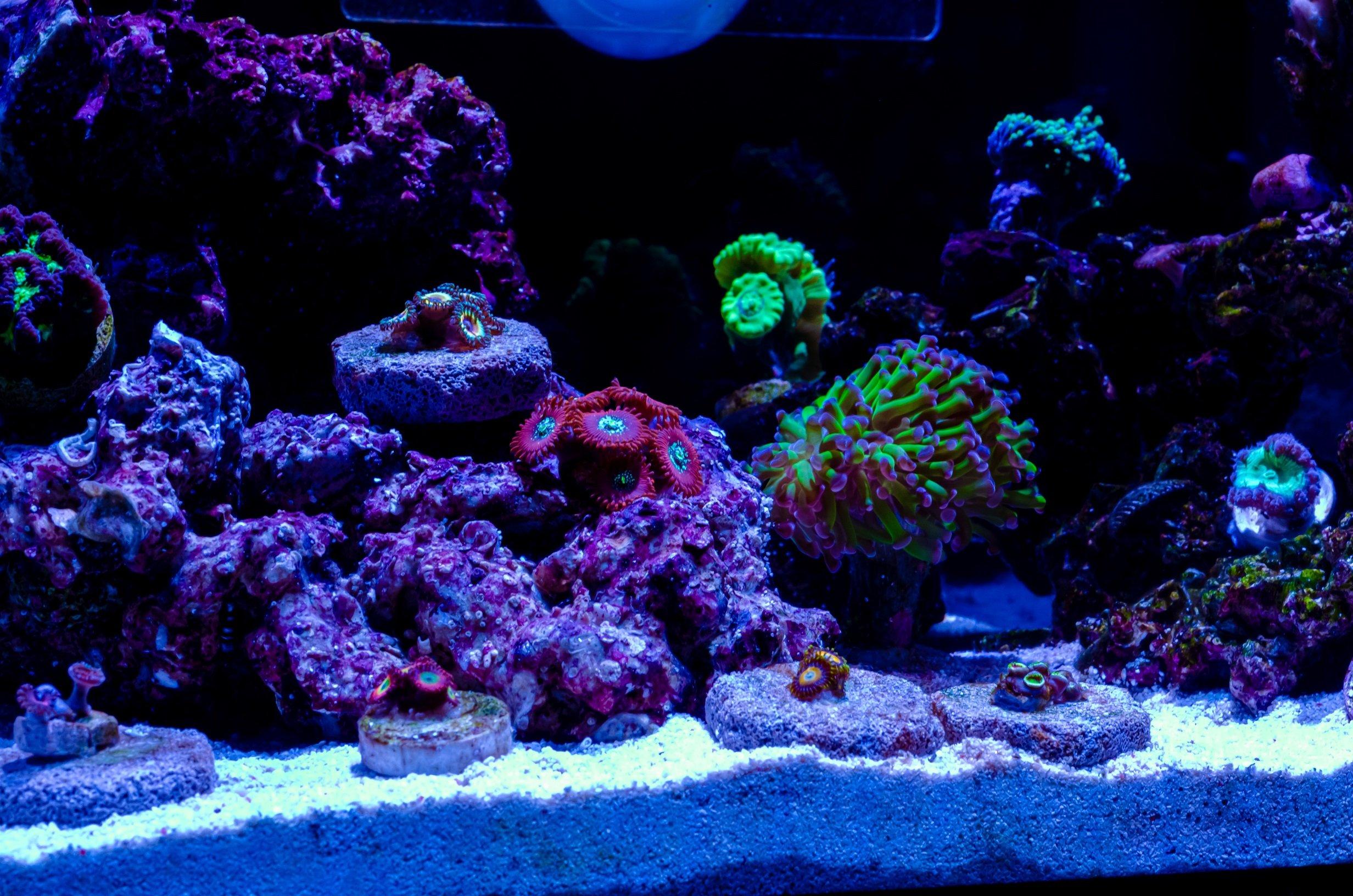 Aquarium-03.jpg