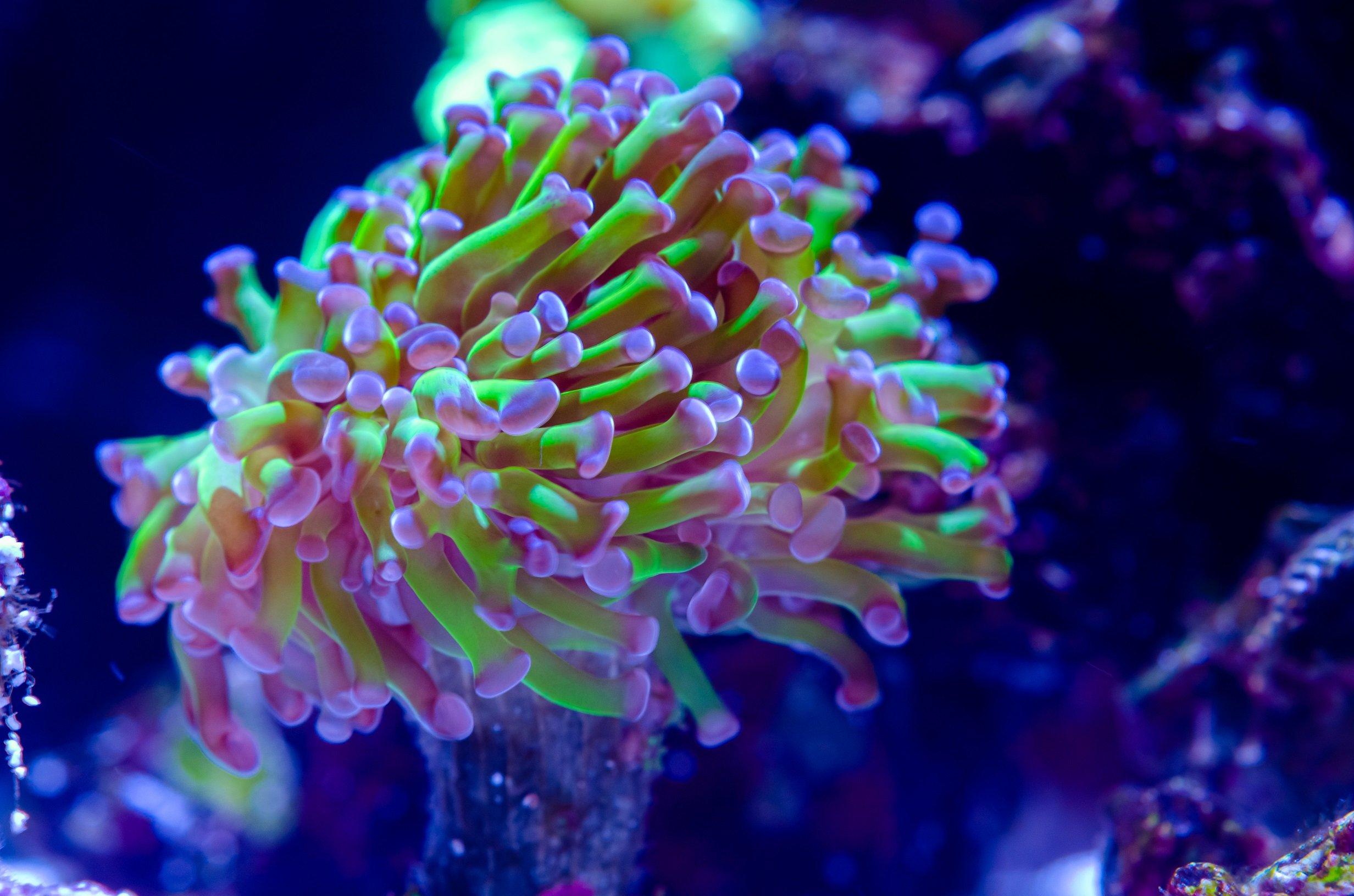 Aquarium-07.jpg
