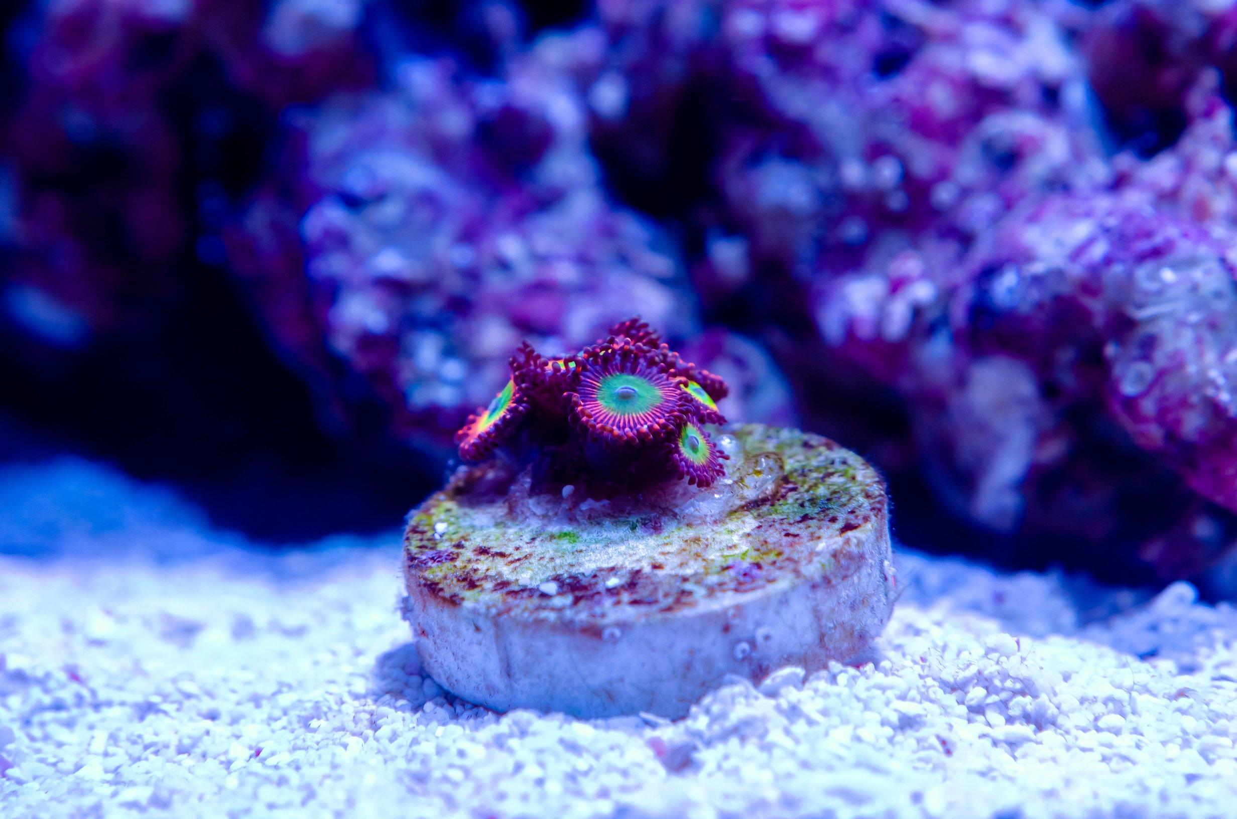 Aquarium-13.jpg