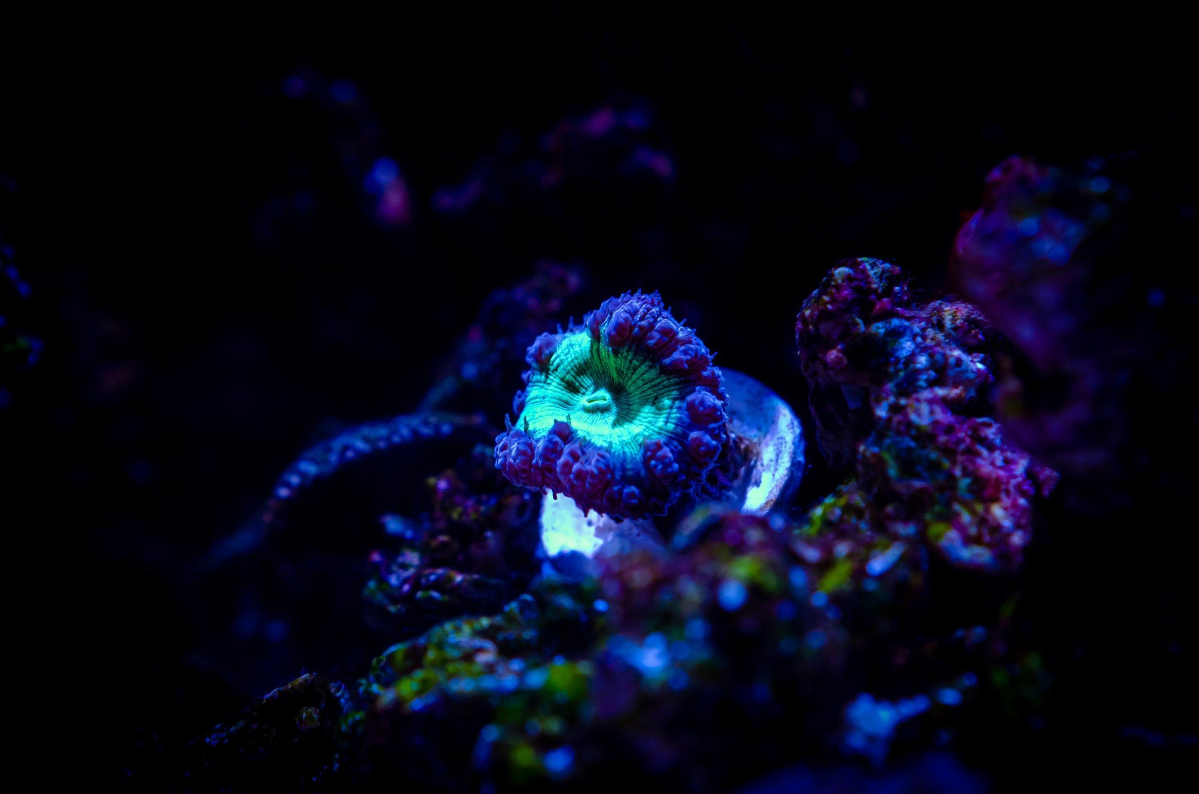 Aquarium-25.jpg
