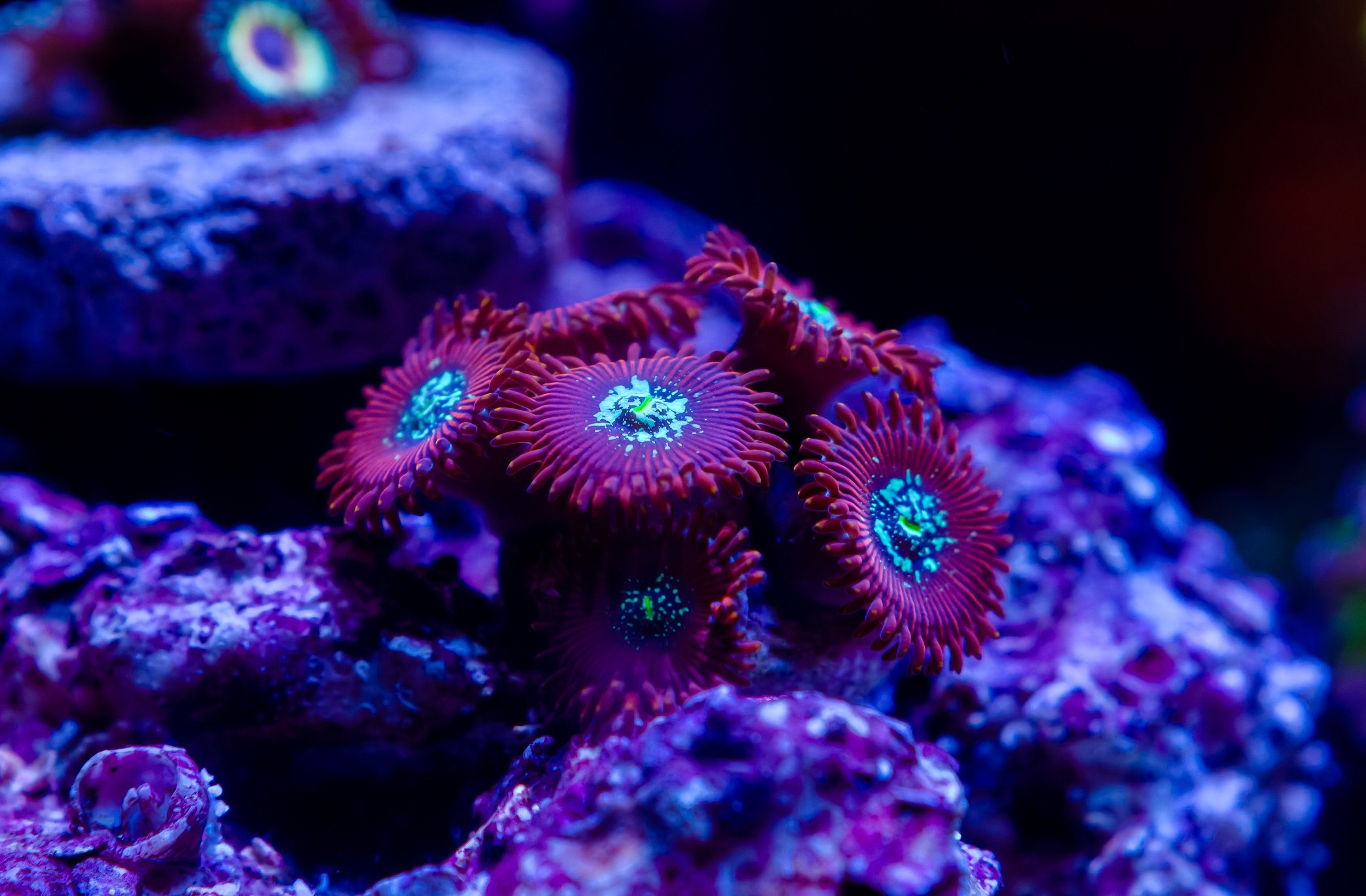 Aquarium-31.jpg
