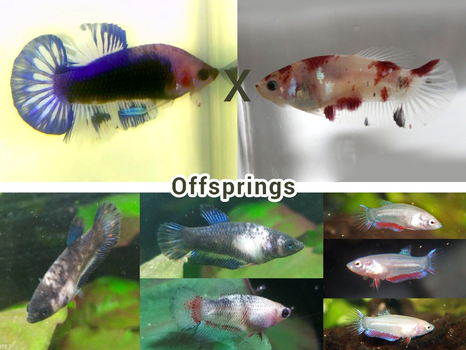 Breeding 8.jpg