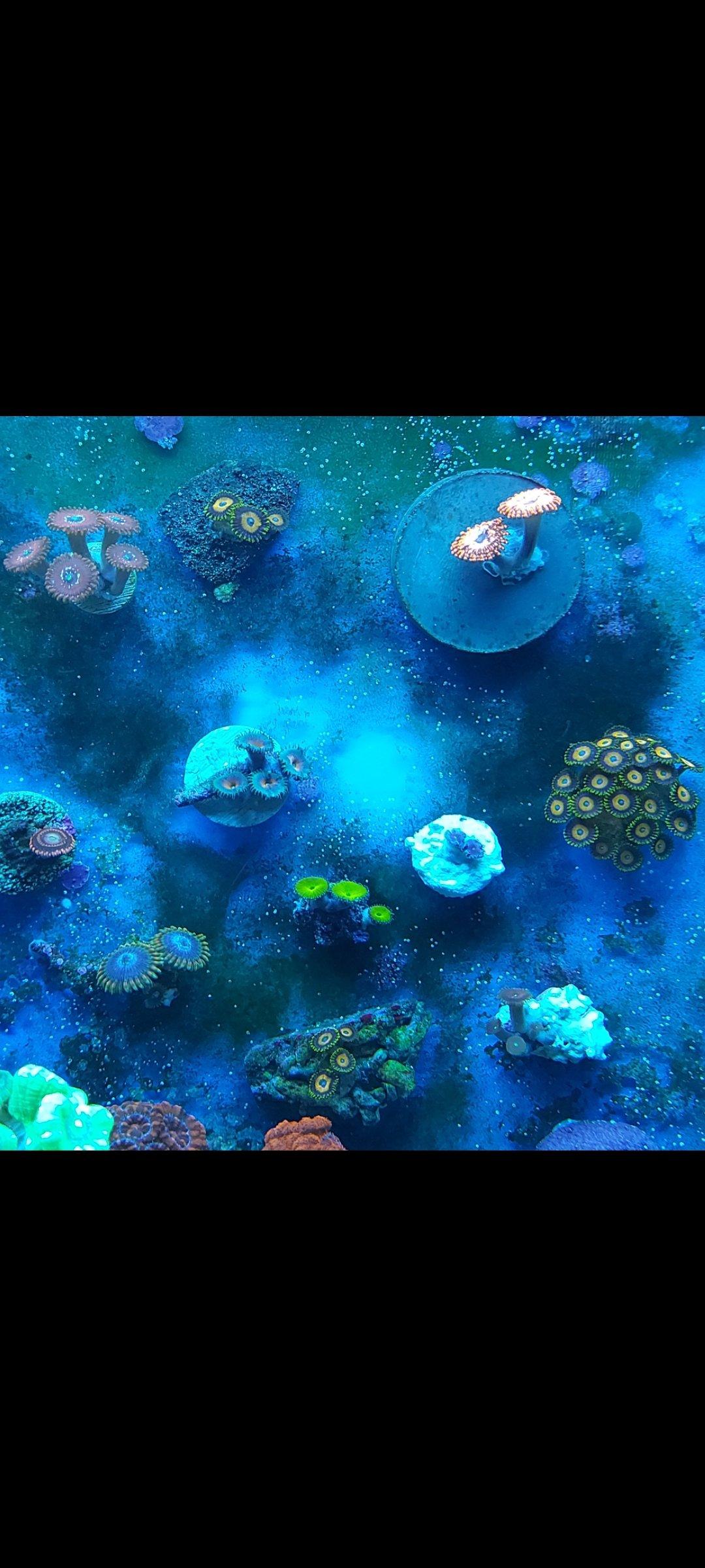 Aquael reefmax